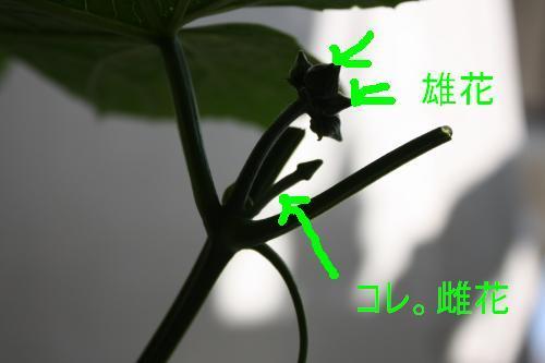 IMG_44420.JPG